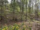 Lot 51 Tank Road, Butler, TN 37640 - Image 1: Property on Left from Lower Road
