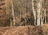 0 N. Point Trail, ALLONS, TN 38541 - Image 1: Main View