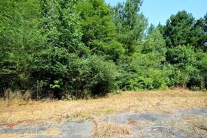 LOT 1 COUNTY ROAD 204 Property Photo
