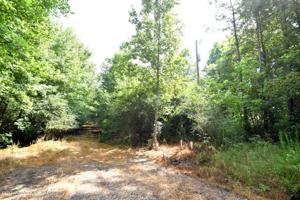 LOT 10 COUNTY ROAD 204 Property Photo