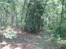 Lot 679 Rhododendron Court, Westminster, SC 29693 Property Photo