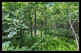 00 LAKE CHATTOOGA ROAD, MOUNTAIN REST, SC 29664 - Image 1