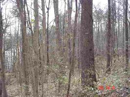 6497 W TOCCOA (123)  HWY, WESTMINSTER, SC 29693 Property Photo