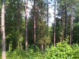 00 Willow Cove Way, Six Mile, SC 29682 Property Photo