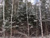Pineview Road Lot Lots 282, 283, 284, Presque Isle, MI 49777 - Image 1: main